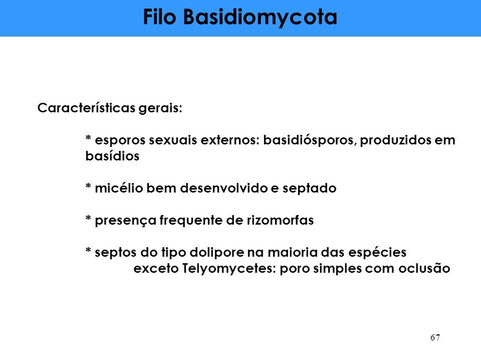 Filo Basidiomycota Características gerais: * esporos sexuais externos: basidiósporos, produzidos em basídios * micélio bem desenvolvido e septado * presença frequente de rizomorfas * septos do tipo dolipore na maioria das espécies exceto Telyomycetes: poro simples com oclusão 67