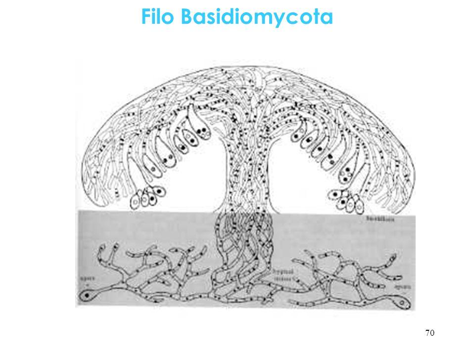 Filo Basidiomycota 70