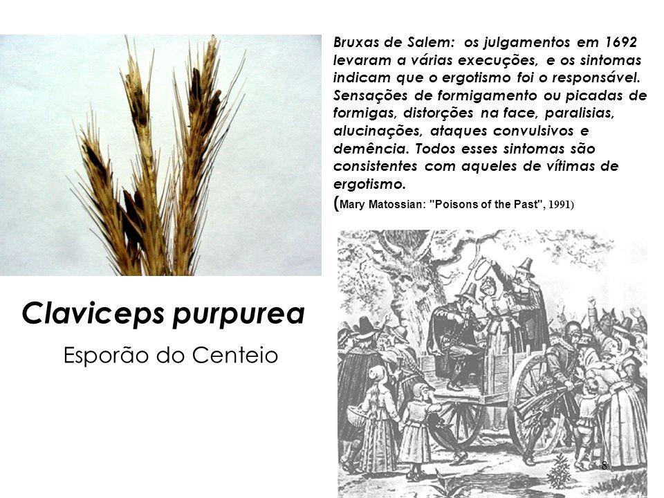 Claviceps purpurea Esporão do Centeio Bruxas de Salem: os julgamentos em 1692 levaram a várias execuções, e os sintomas indicam que o ergotismo foi o responsável.