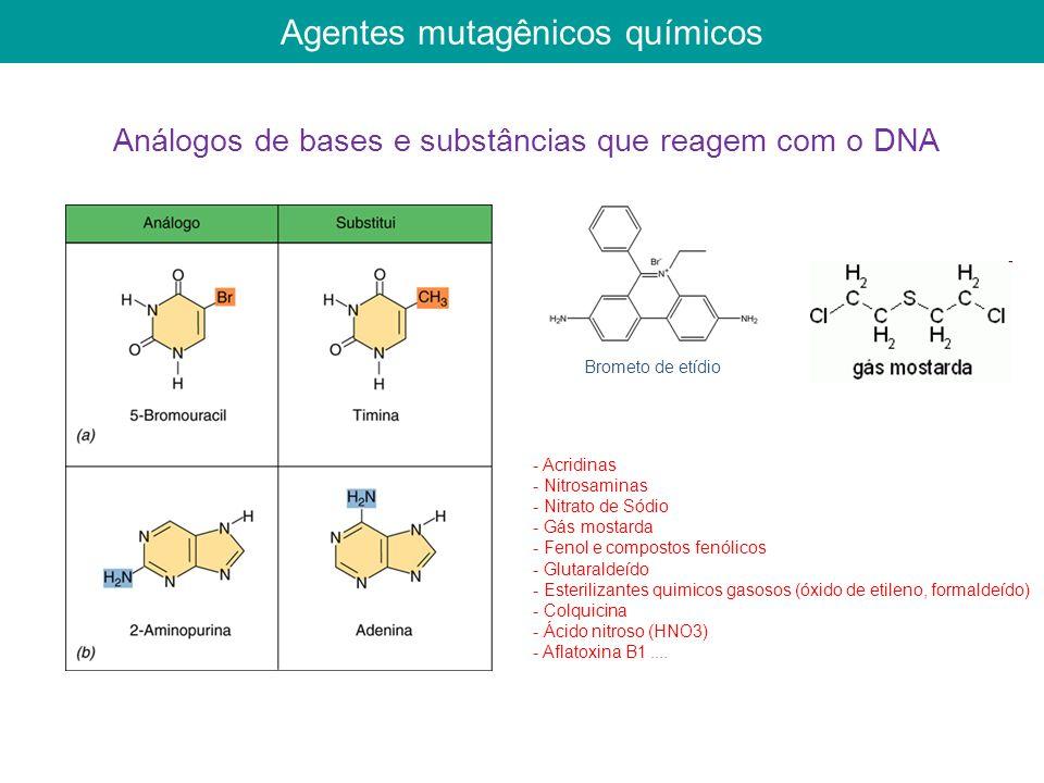Agentes mutagênicos químicos Brometo de etídio Análogos de bases e substâncias que reagem com o DNA - Acridinas - Nitrosaminas - Nitrato de Sódio - Gás mostarda - Fenol e compostos fenólicos - Glutaraldeído - Esterilizantes quimicos gasosos (óxido de etileno, formaldeído) - Colquicina - Ácido nitroso (HNO3) - Aflatoxina B1....