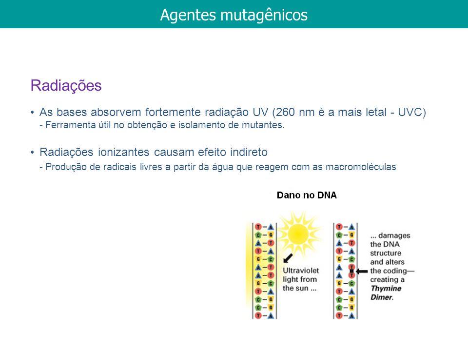 As bases absorvem fortemente radiação UV (260 nm é a mais letal - UVC) - Ferramenta útil no obtenção e isolamento de mutantes. Radiações ionizantes ca