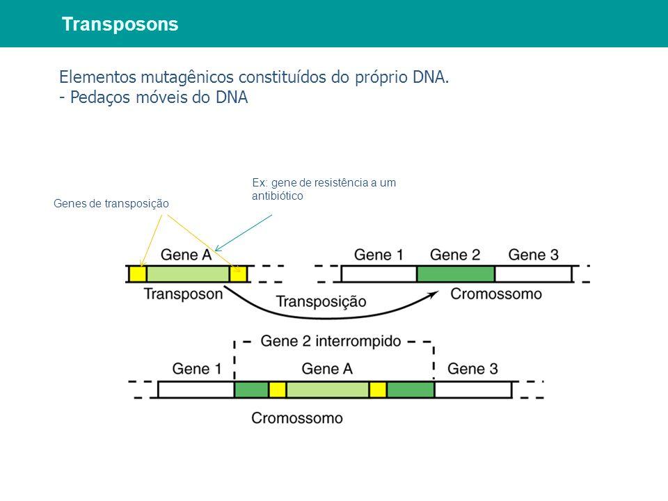 Genes de transposição Ex: gene de resistência a um antibiótico Transposons Elementos mutagênicos constituídos do próprio DNA. - Pedaços móveis do DNA