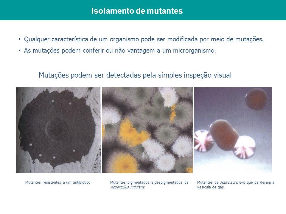 Isolamento de mutantes Mutantes resistentes a um antibiótico Qualquer característica de um organismo pode ser modificada por meio de mutações. As muta