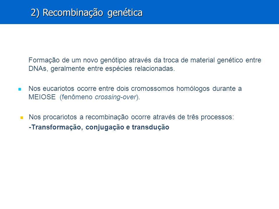 Formação de um novo genótipo através da troca de material genético entre DNAs, geralmente entre espécies relacionadas.
