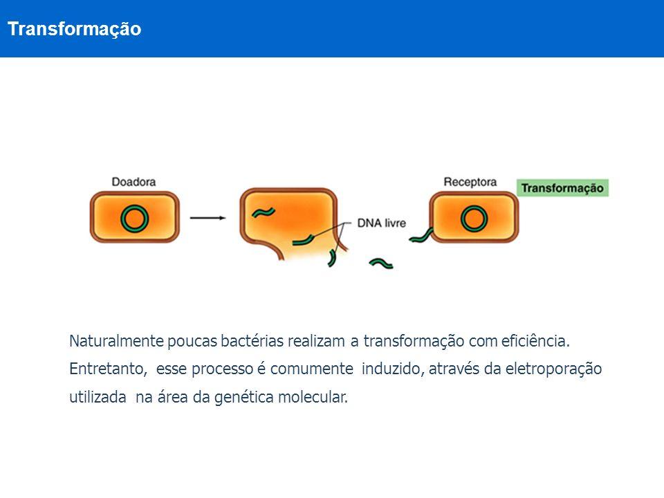 Transformação Naturalmente poucas bactérias realizam a transformação com eficiência. Entretanto, esse processo é comumente induzido, através da eletro