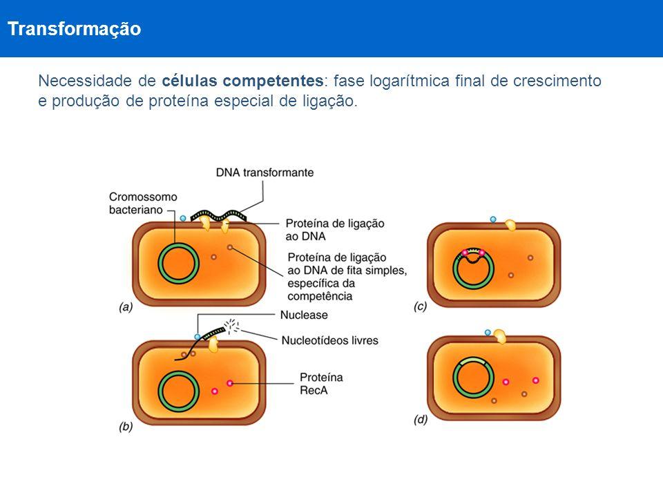 Transformação Necessidade de células competentes: fase logarítmica final de crescimento e produção de proteína especial de ligação.