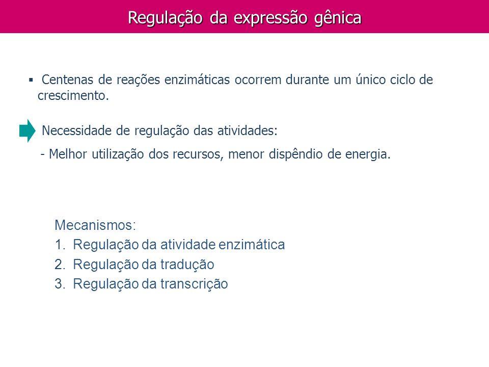 Mecanismos: 1. 1.Regulação da atividade enzimática 2. 2.Regulação da tradução 3. 3.Regulação da transcrição Regulação da expressão gênica Centenas de