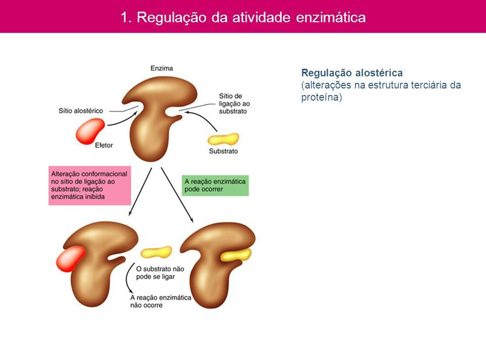 1. Regulação da atividade enzimática Regulação alostérica (alterações na estrutura terciária da proteína)
