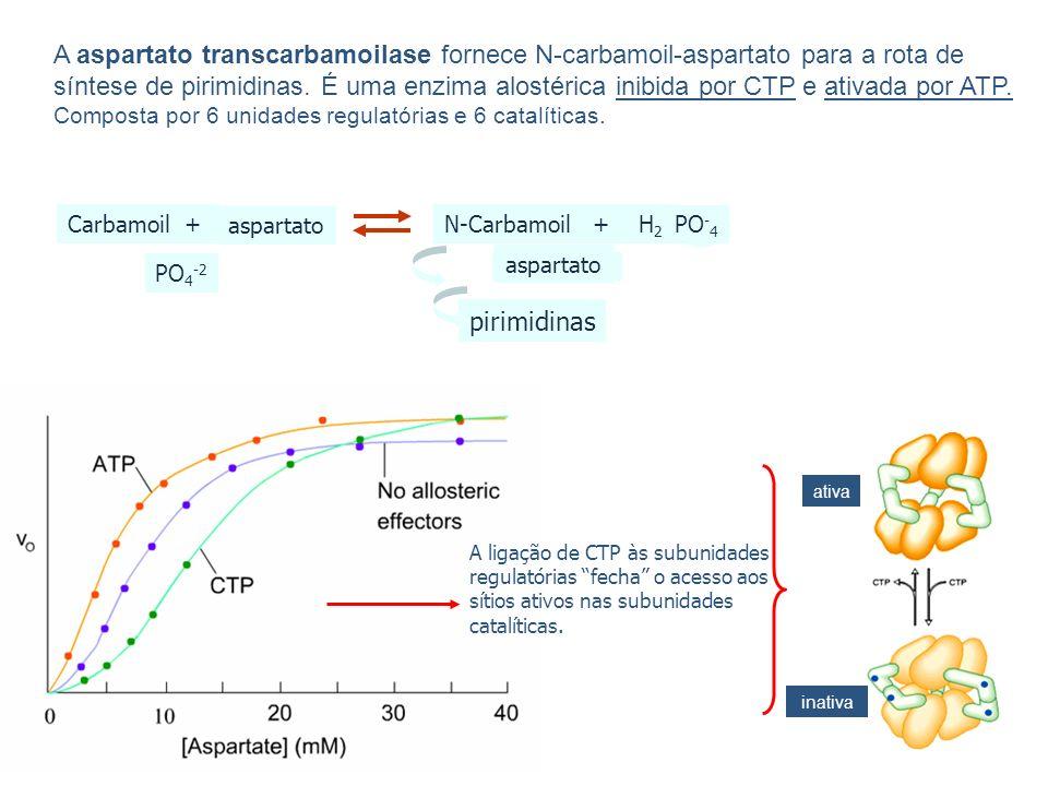 A aspartato transcarbamoilase fornece N-carbamoil-aspartato para a rota de síntese de pirimidinas.
