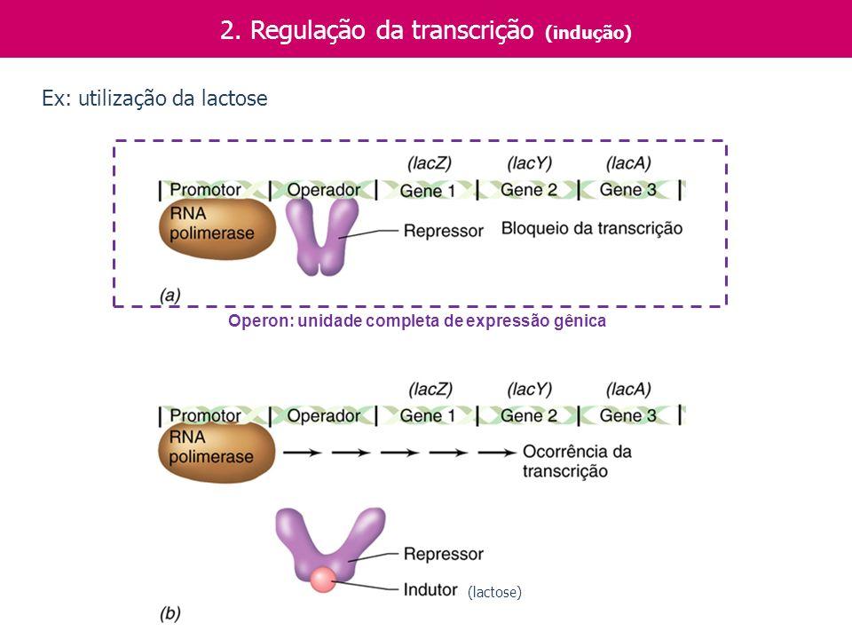 2. Regulação da transcrição (indução) Operon: unidade completa de expressão gênica Ex: utilização da lactose (lactose)