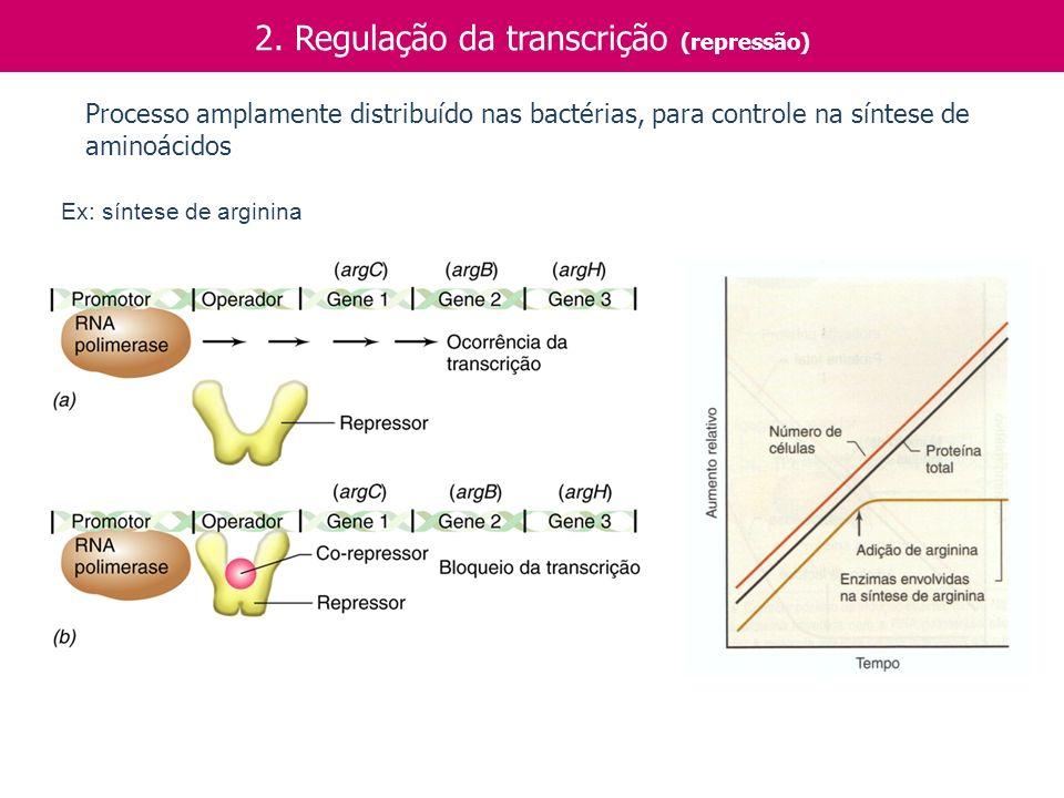 2. Regulação da transcrição (repressão) Ex: síntese de arginina Processo amplamente distribuído nas bactérias, para controle na síntese de aminoácidos