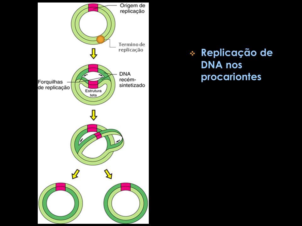 Replicação de DNA nos procariontes Termino de replicação