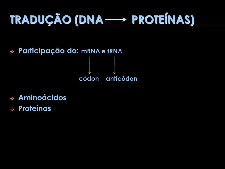TRADUÇÃO (DNA PROTEÍNAS) Participação do: mRNA e tRNA códon anticódon Aminoácidos Proteínas