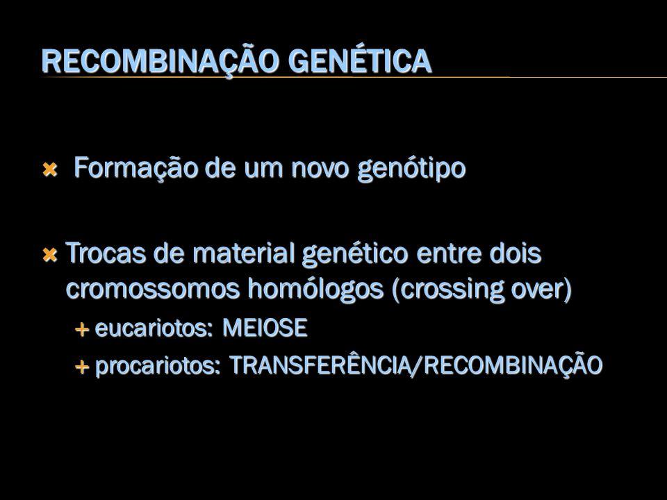RECOMBINAÇÃO GENÉTICA Formação de um novo genótipo Formação de um novo genótipo Trocas de material genético entre dois cromossomos homólogos (crossing