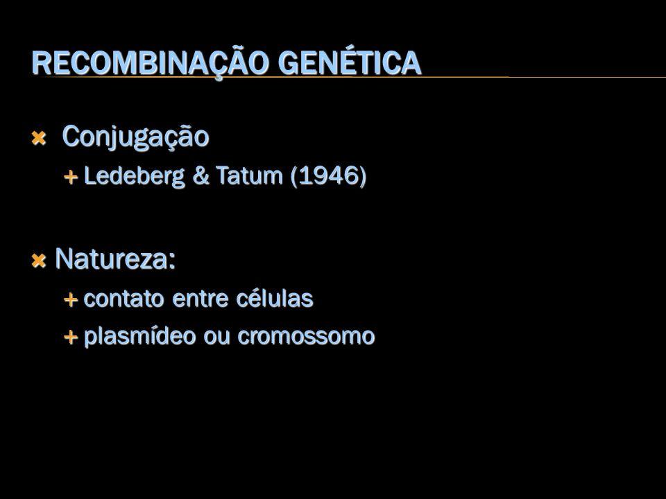 RECOMBINAÇÃO GENÉTICA Conjugação Conjugação Ledeberg & Tatum (1946) Ledeberg & Tatum (1946) Natureza: Natureza: contato entre células contato entre cé