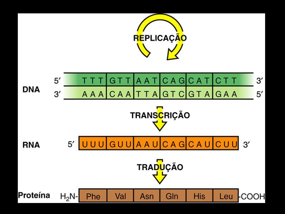 COMO DETECTAR MUTAÇÕES Serratia marcescens: vermelho normal, cinza mutantes