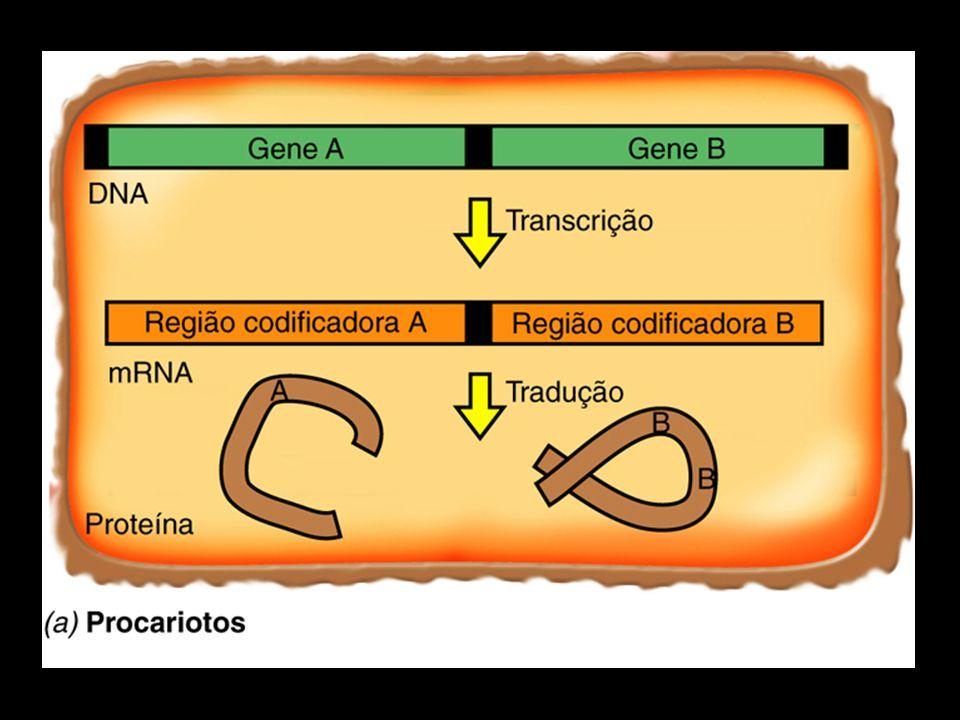 RECOMBINAÇÃO GENÉTICA Formação de um novo genótipo Formação de um novo genótipo Trocas de material genético entre dois cromossomos homólogos (crossing over) Trocas de material genético entre dois cromossomos homólogos (crossing over) eucariotos: MEIOSE eucariotos: MEIOSE procariotos: TRANSFERÊNCIA/RECOMBINAÇÃO procariotos: TRANSFERÊNCIA/RECOMBINAÇÃO