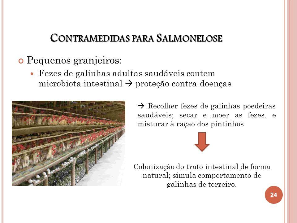 C ONTRAMEDIDAS PARA S ALMONELOSE Pequenos granjeiros: Fezes de galinhas adultas saudáveis contem microbiota intestinal proteção contra doenças Recolhe