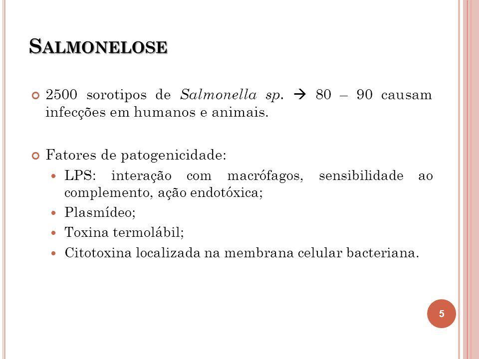 S ALMONELOSE 2500 sorotipos de Salmonella sp. 80 – 90 causam infecções em humanos e animais. Fatores de patogenicidade: LPS: interação com macrófagos,