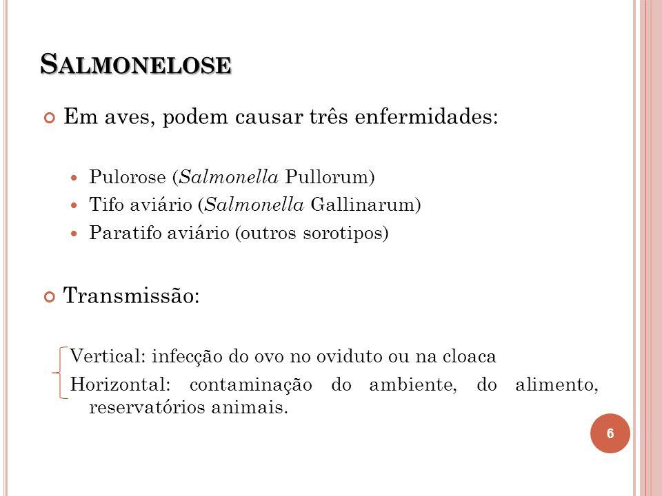 S ALMONELOSE Em aves, podem causar três enfermidades: Pulorose ( Salmonella Pullorum) Tifo aviário ( Salmonella Gallinarum) Paratifo aviário (outros s