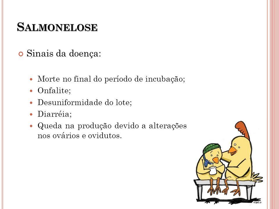 S ALMONELOSE Sinais da doença: Morte no final do período de incubação; Onfalite; Desuniformidade do lote; Diarréia; Queda na produção devido a alteraç