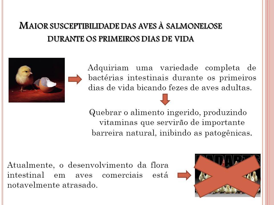 M AIOR SUSCEPTIBILIDADE DAS AVES À SALMONELOSE DURANTE OS PRIMEIROS DIAS DE VIDA Adquiriam uma variedade completa de bactérias intestinais durante os