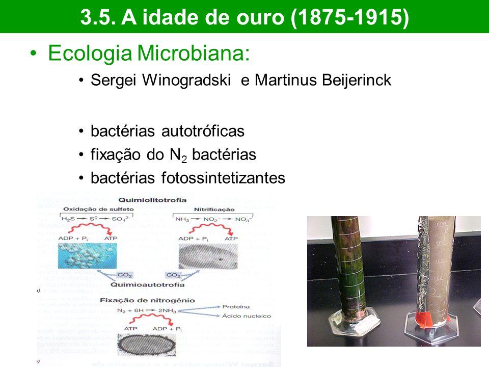 Ecologia Microbiana: Sergei Winogradski e Martinus Beijerinck bactérias autotróficas fixação do N 2 bactérias bactérias fotossintetizantes 3.5. A idad