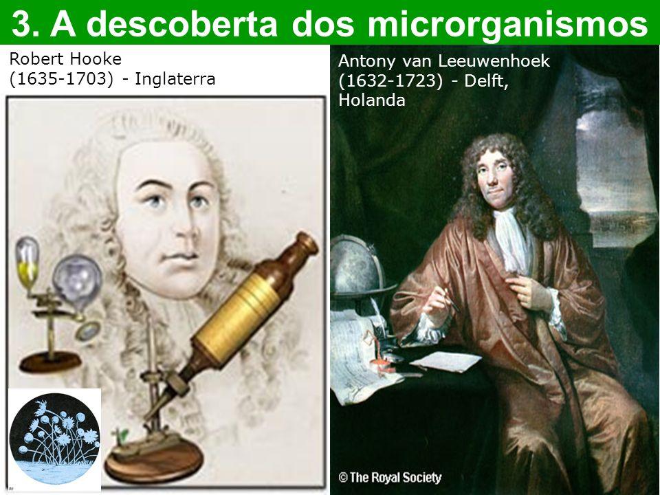 3. A descoberta dos microrganismos Antony van Leeuwenhoek (1632-1723) - Delft, Holanda Robert Hooke (1635-1703) - Inglaterra