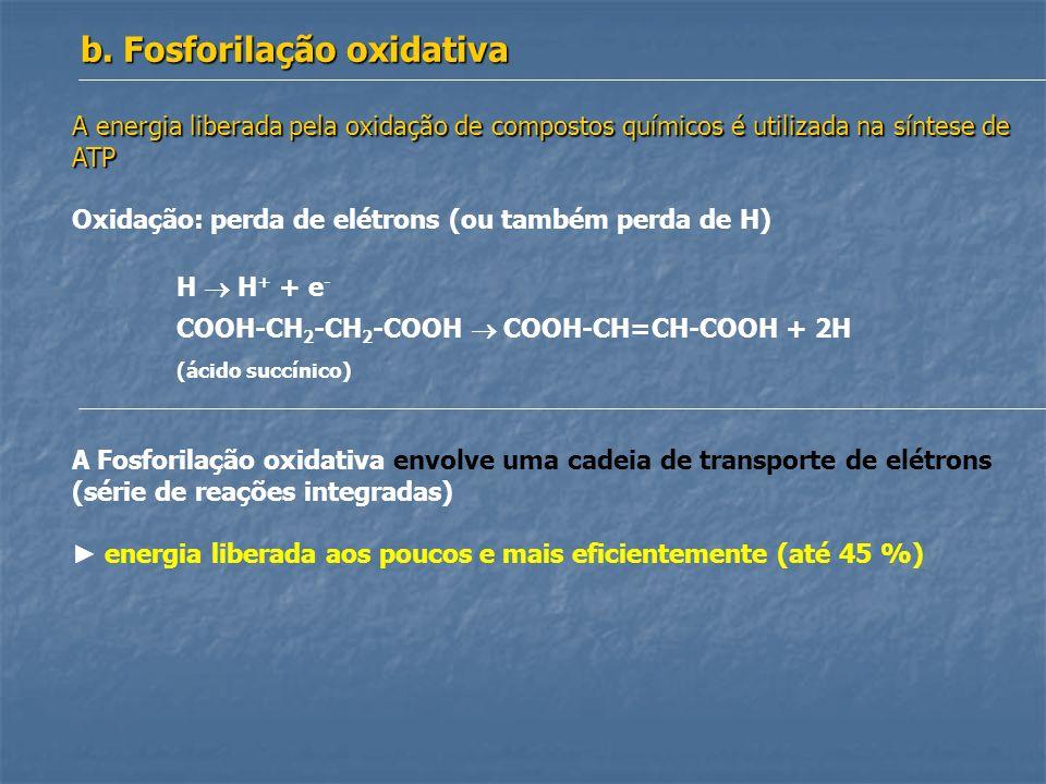 A energia liberada pela oxidação de compostos químicos é utilizada na síntese de ATP Oxidação: perda de elétrons (ou também perda de H) H H + + e - CO