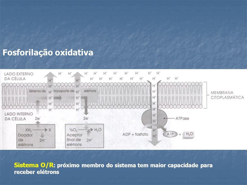 Fosforilação oxidativa Sistema O/R : próximo membro do sistema tem maior capacidade para receber elétrons