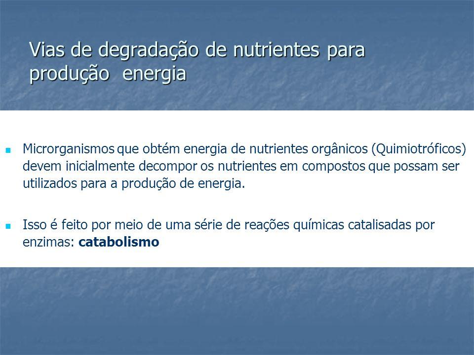 Vias de degradação de nutrientes para produção energia Microrganismos que obtém energia de nutrientes orgânicos (Quimiotróficos) devem inicialmente de