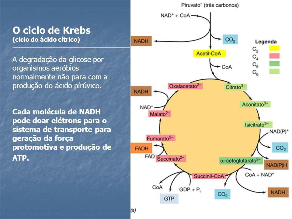 O ciclo de Krebs (ciclo do ácido cítrico) A degradação da glicose por organismos aeróbios normalmente não para com a produção do ácido pírúvico. Cada