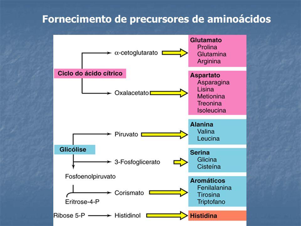 Fornecimento de precursores de aminoácidos