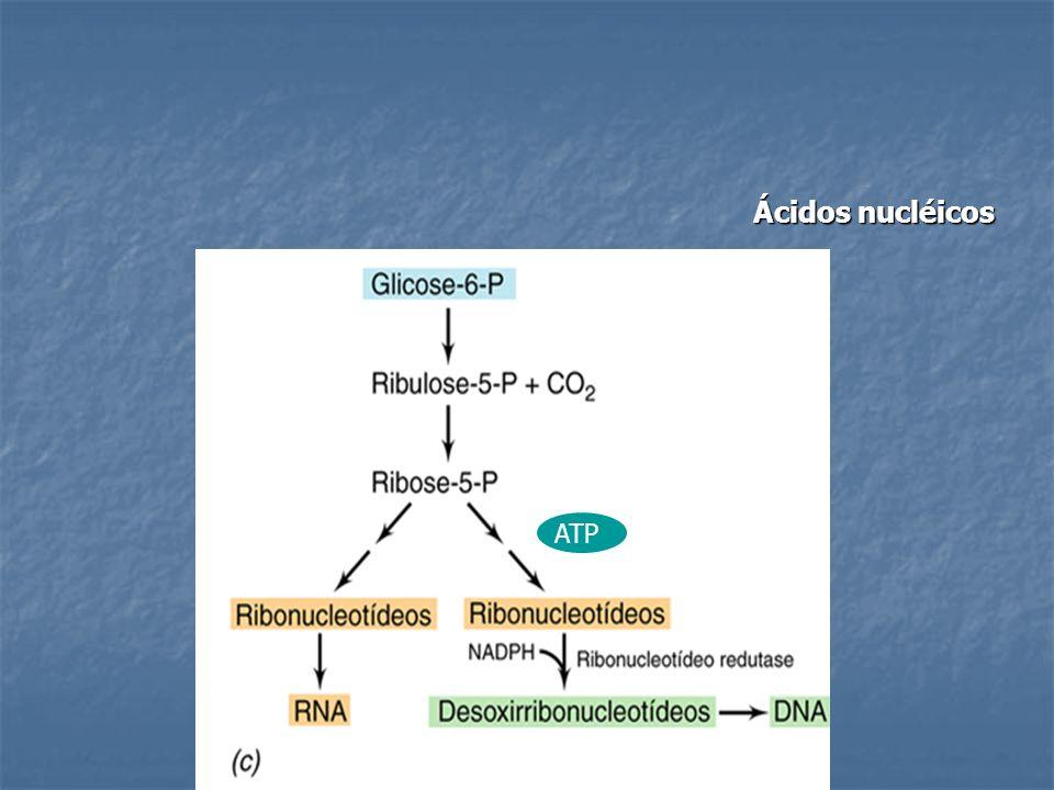 Ácidos nucléicos ATP