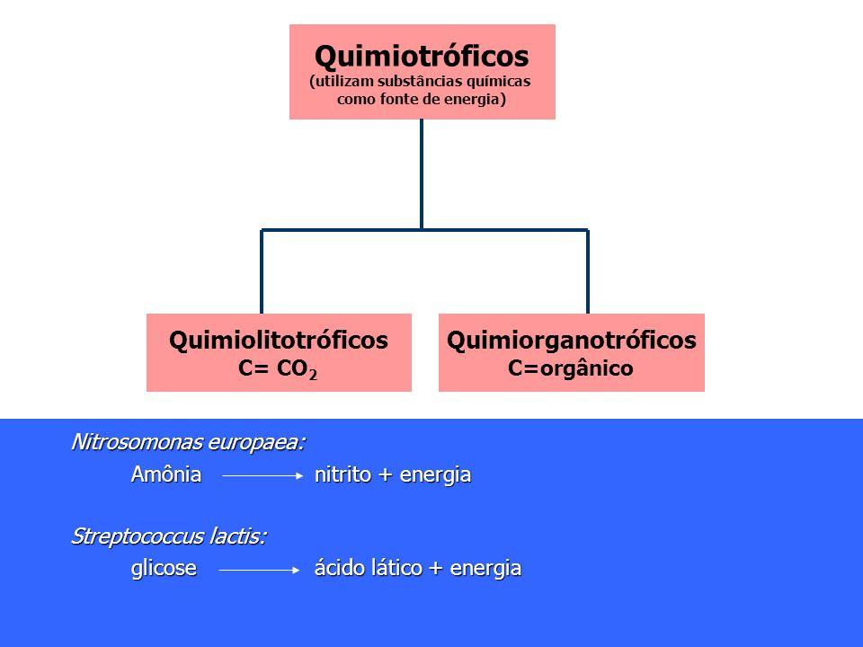 Quimiotróficos (utilizam substâncias químicas como fonte de energia) Quimiolitotróficos C= CO 2 Quimiorganotróficos C=orgânico Nitrosomonas europaea: