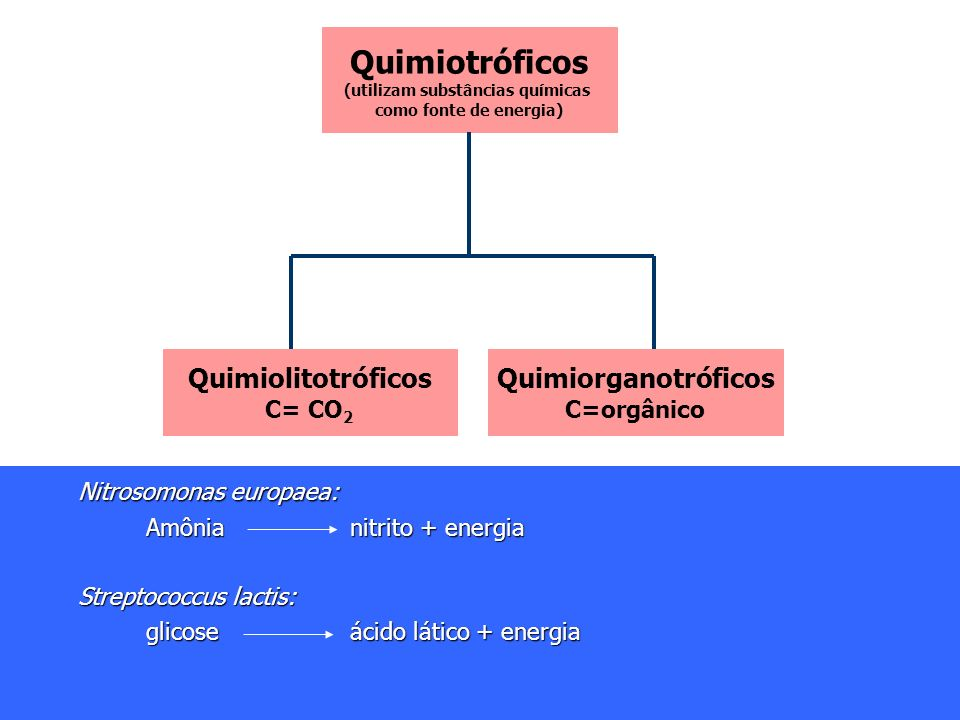 Anabaena cylindrica (cianobactéria) Anabaena cylindrica (cianobactéria) Luzenergia