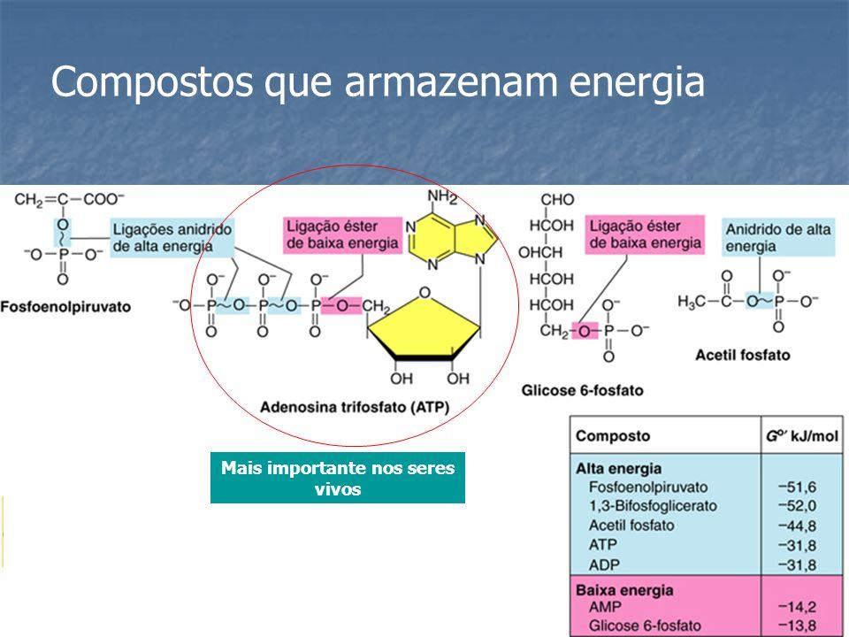 Compostos que armazenam energia Mais importante nos seres vivos