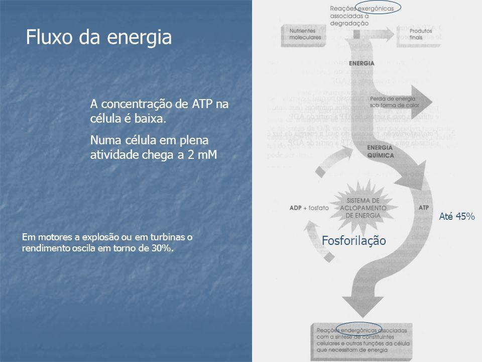 Fluxo da energia A concentração de ATP na célula é baixa. Numa célula em plena atividade chega a 2 mM Em motores a explosão ou em turbinas o rendiment