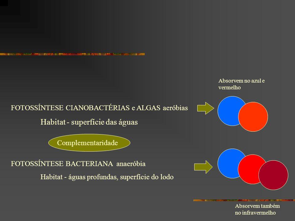 FOTOSSÍNTESE CIANOBACTÉRIAS e ALGAS aeróbias Habitat - superfície das águas FOTOSSÍNTESE BACTERIANA anaeróbia Habitat - águas profundas, superfície do lodo Absorvem também no infravermelho Absorvem no azul e vermelho Complementaridade