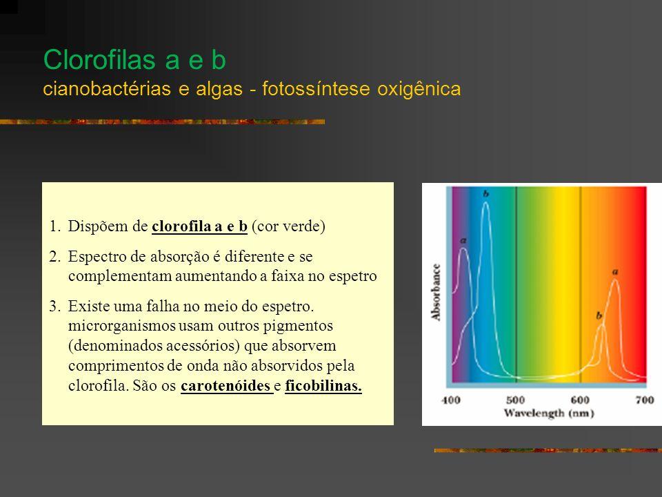 1.Dispõem de clorofila a e b (cor verde) 2.Espectro de absorção é diferente e se complementam aumentando a faixa no espetro 3.Existe uma falha no meio do espetro.
