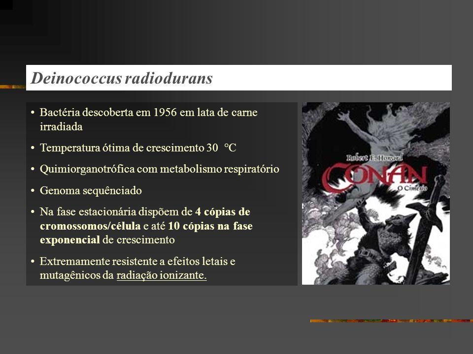 Deinococcus radiodurans Bactéria descoberta em 1956 em lata de carne irradiada Temperatura ótima de crescimento 30 °C Quimiorganotrófica com metabolismo respiratório Genoma sequênciado Na fase estacionária dispõem de 4 cópias de cromossomos/célula e até 10 cópias na fase exponencial de crescimento Extremamente resistente a efeitos letais e mutagênicos da radiação ionizante.