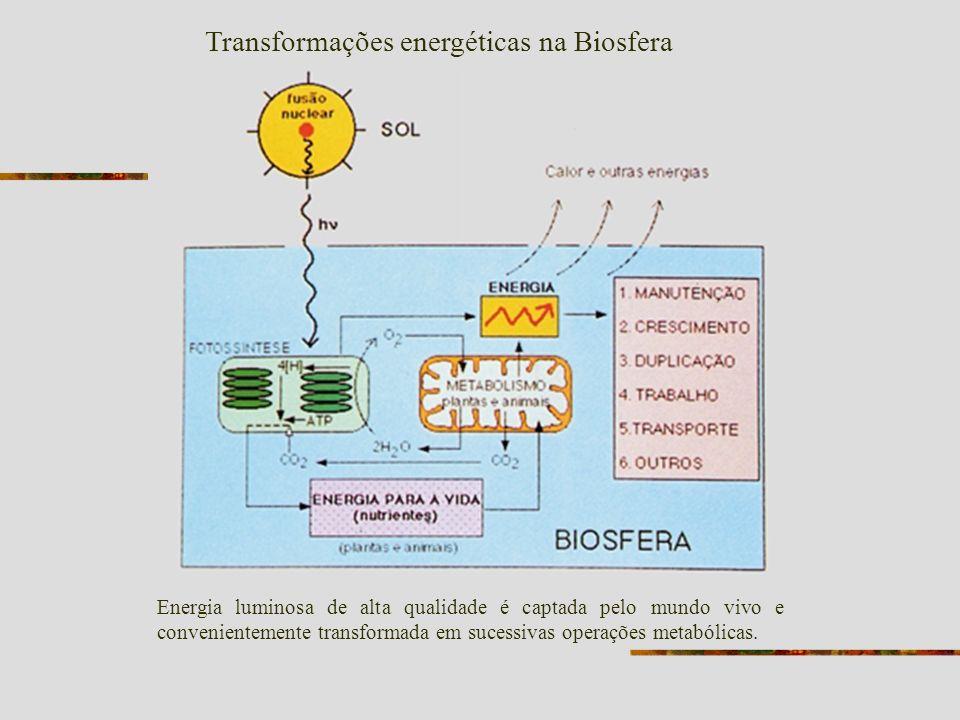 Radiação visível - Luz visível Em elevadas intensidades gera oxigênio na forma ( 1 O 2 ) PODEROSO AGENTE OXIDANTE - Pigmentos carotenóides Protegem muitos microrganismos da fotoxidação