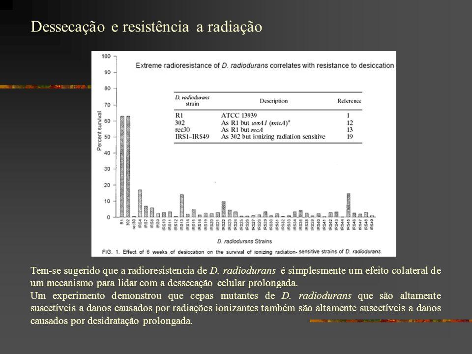 Dessecação e resistência a radiação Tem-se sugerido que a radioresistencia de D.