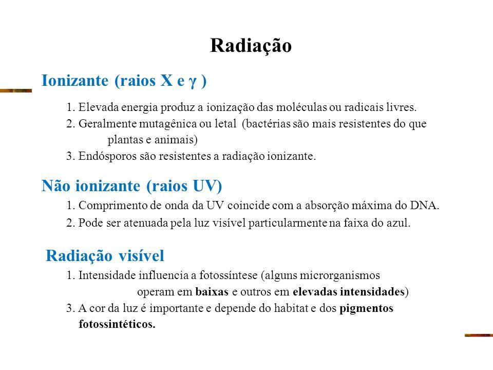 Tétrades Deinococcus radiodurans Presença de carotenóides Conan, a bactéria http://science.nasa.gov/NEWHOME/headlines/ast14dec99_1.htm