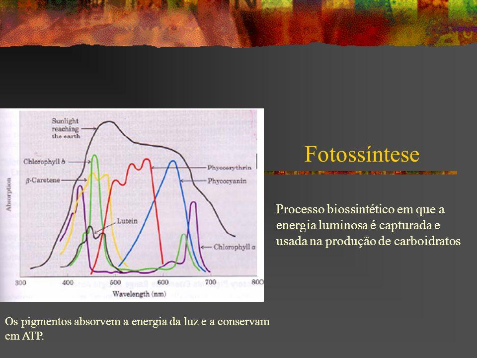 Fotossíntese Processo biossintético em que a energia luminosa é capturada e usada na produção de carboidratos Os pigmentos absorvem a energia da luz e a conservam em ATP.