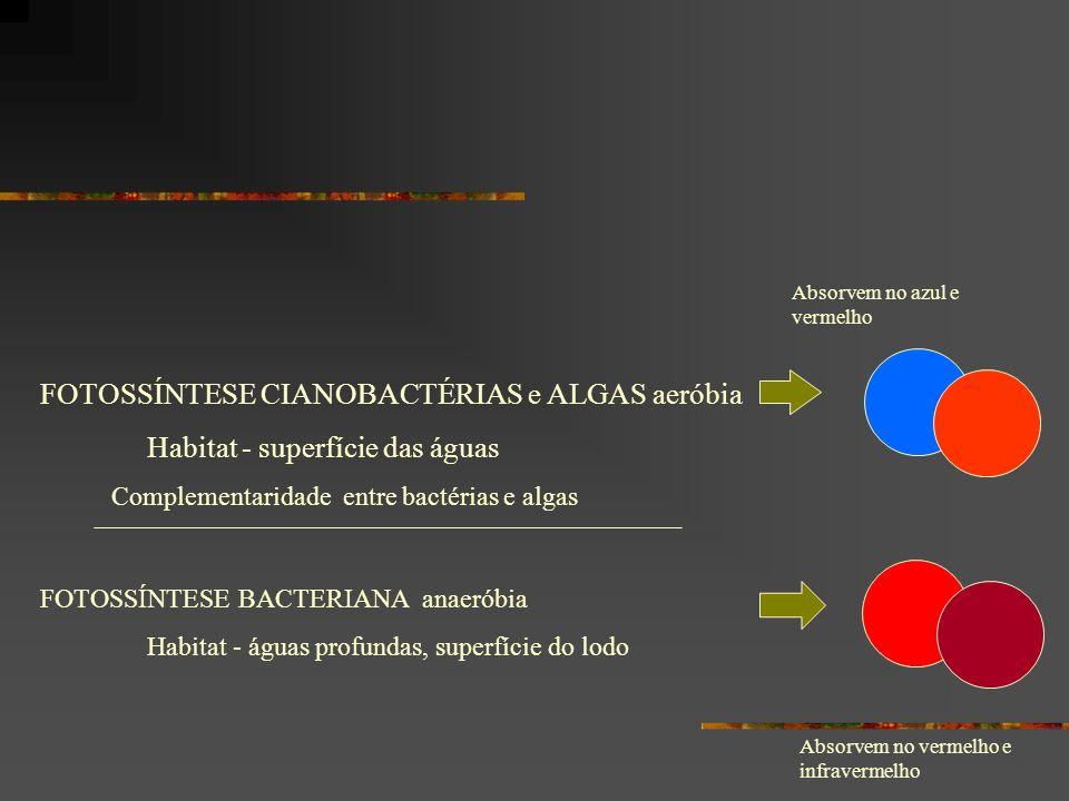 FOTOSSÍNTESE CIANOBACTÉRIAS e ALGAS aeróbia Habitat - superfície das águas FOTOSSÍNTESE BACTERIANA anaeróbia Habitat - águas profundas, superfície do