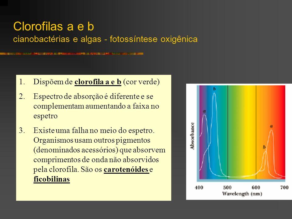 1.Dispõem de clorofila a e b (cor verde) 2.Espectro de absorção é diferente e se complementam aumentando a faixa no espetro 3.Existe uma falha no meio