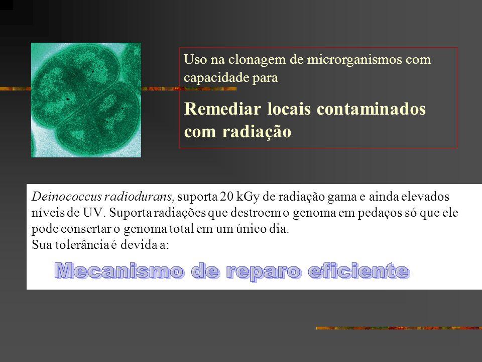 Deinococcus radiodurans, suporta 20 kGy de radiação gama e ainda elevados níveis de UV. Suporta radiações que destroem o genoma em pedaços só que ele