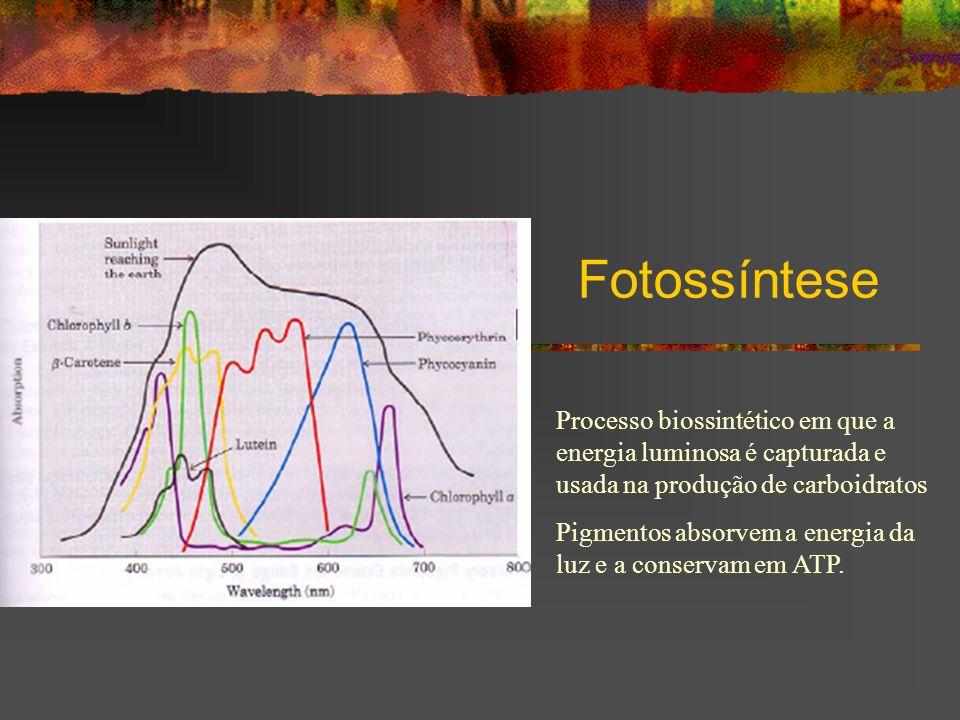 Fotossíntese Processo biossintético em que a energia luminosa é capturada e usada na produção de carboidratos Pigmentos absorvem a energia da luz e a