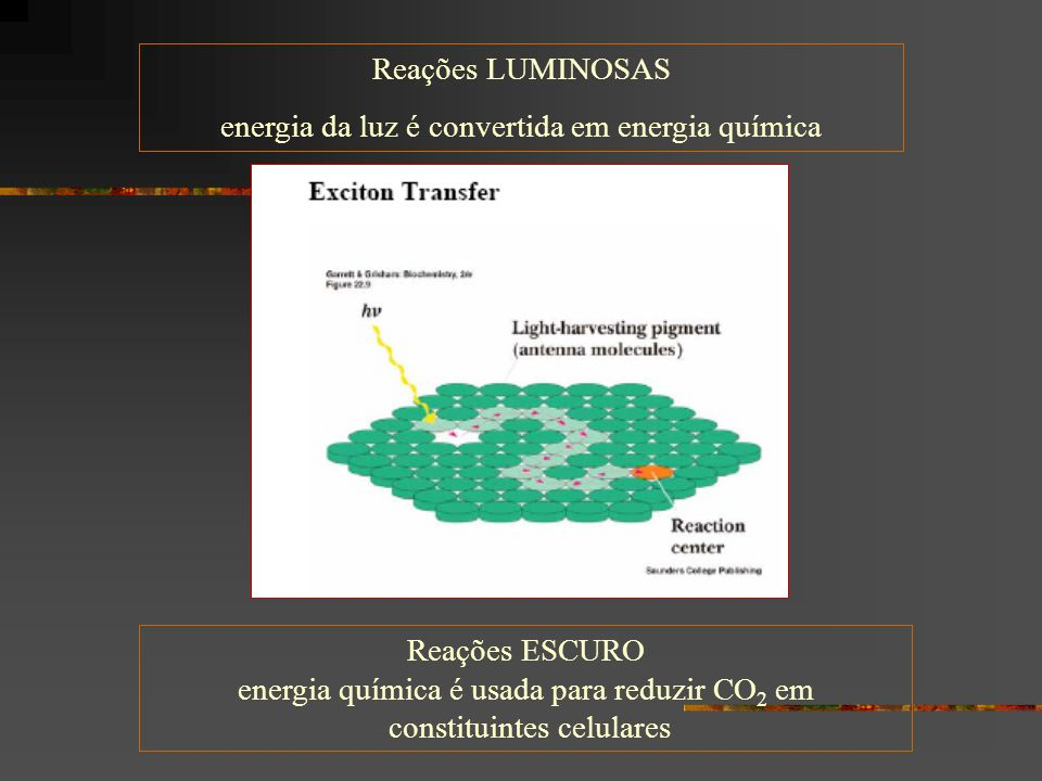 Reações LUMINOSAS energia da luz é convertida em energia química Reações ESCURO energia química é usada para reduzir CO 2 em constituintes celulares